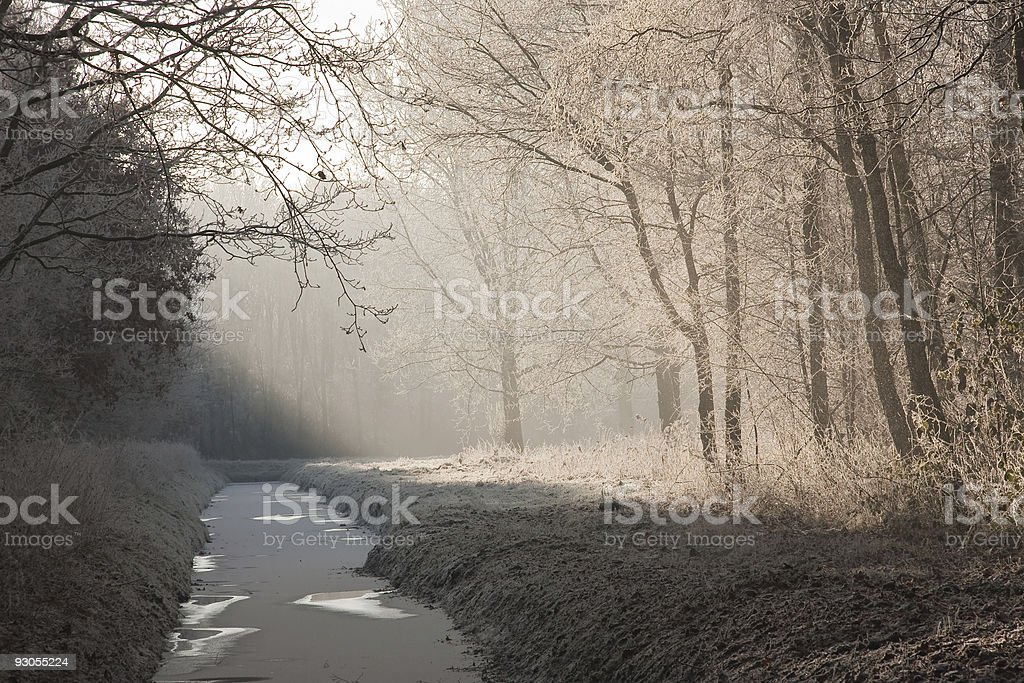 Winter landscape in a frozen forest royalty-free stock photo