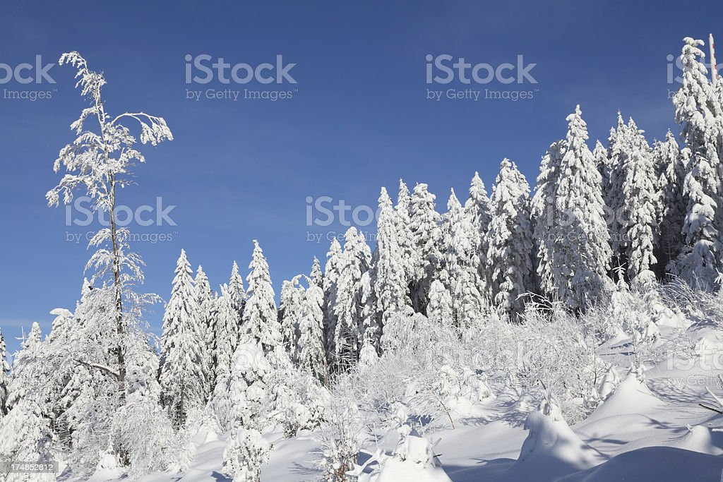 winter landscape in Black Forest royalty-free stock photo