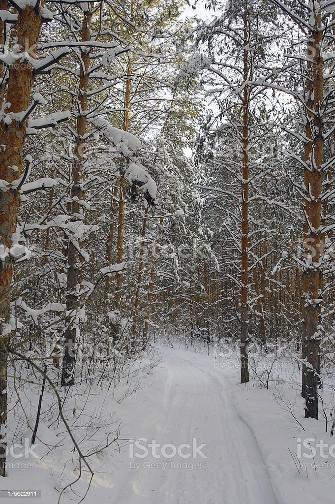 Winter landscape in forest royalty-free stock photo