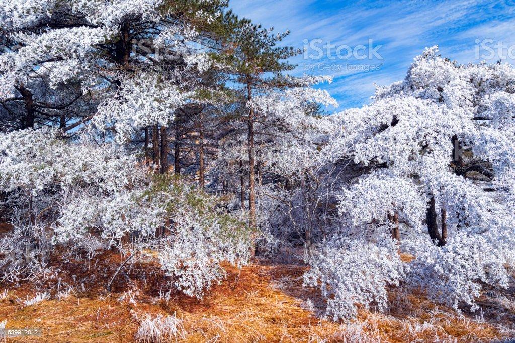 Winter landscape in Huangshan National park. stock photo