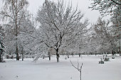 Winter landscape in the city park