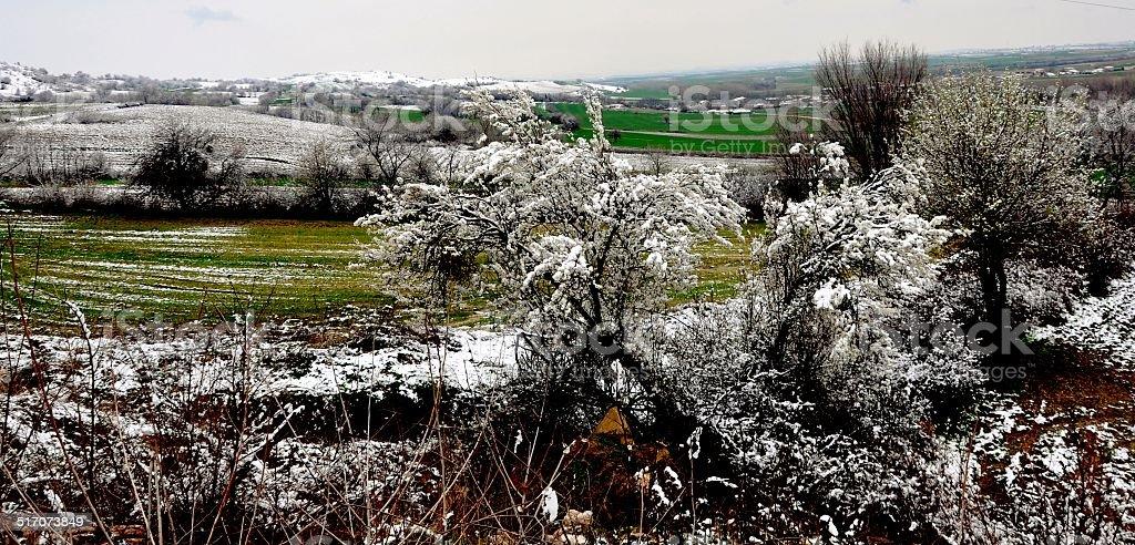 winter landscape near Edirne royalty-free stock photo