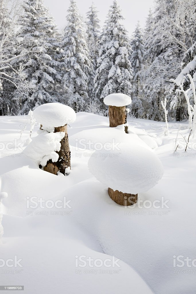 winter landscape of snowcapped forest royalty-free stock photo