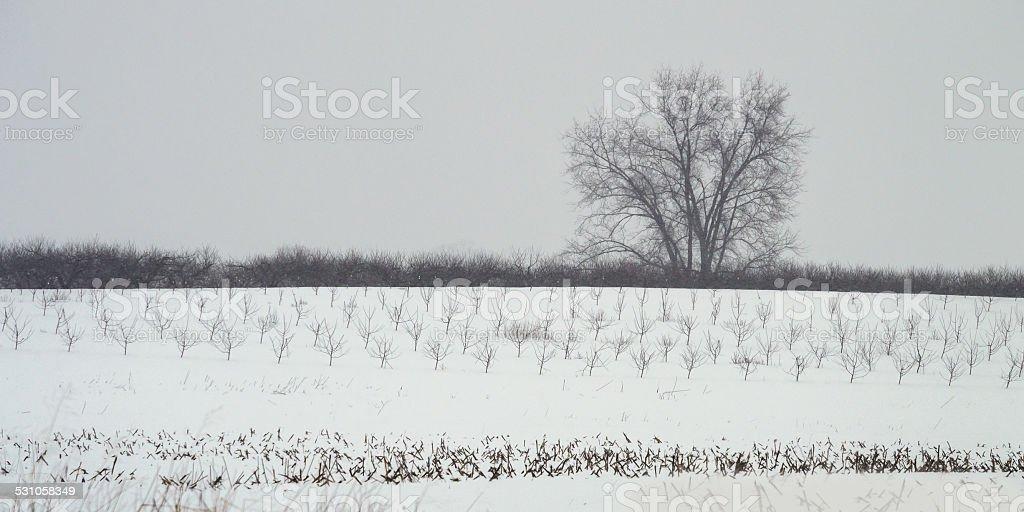 Winter Landscape Panorama stock photo