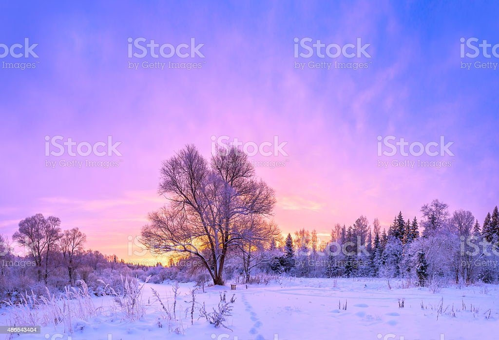 winter landscape panorama with sunset and the  forest stock photo