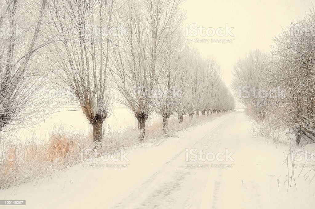 winter landscape path with willow tree at Havel River (Germany) stock photo