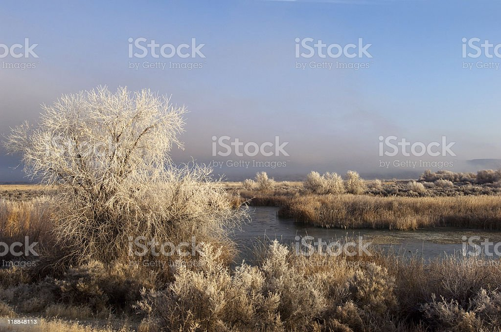 Winter landscape royalty-free stock photo