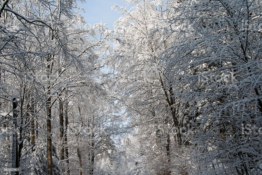 Winter Landschaft stock photo