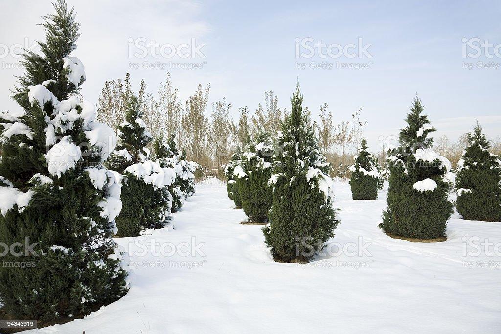 winter landscape royalty-free stock photo