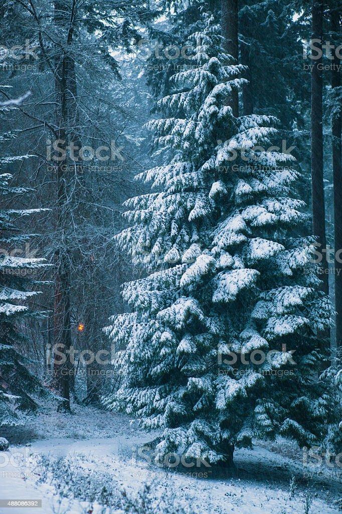 Winter Landscape Scene Snow Covered Forest stock photo
