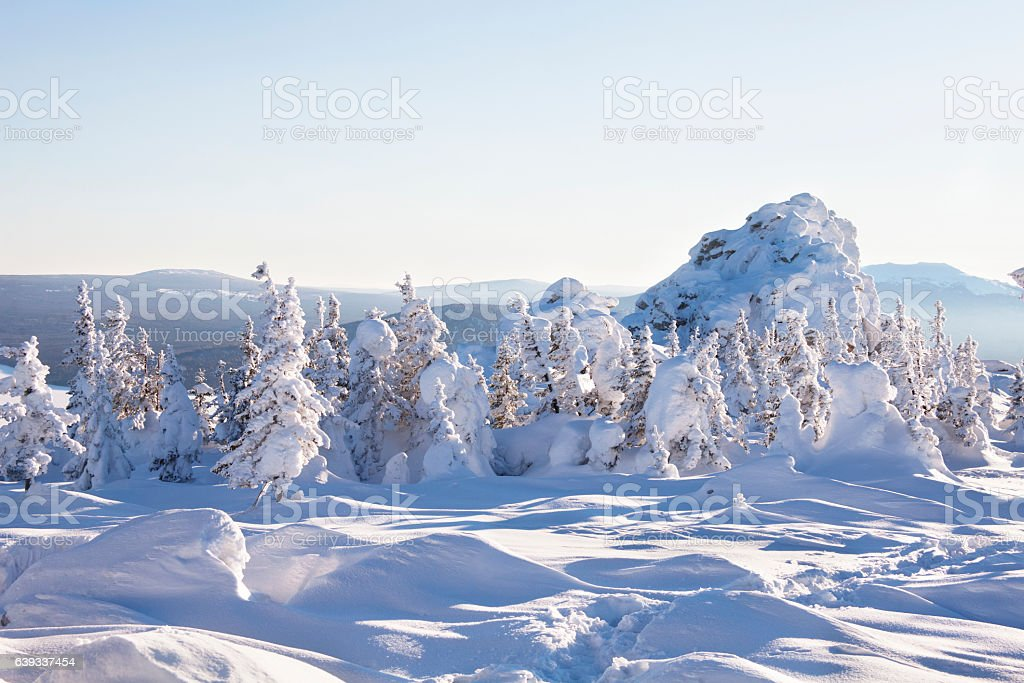 Snow covered fir trees and rocks. Winter landscape. Mountain range...
