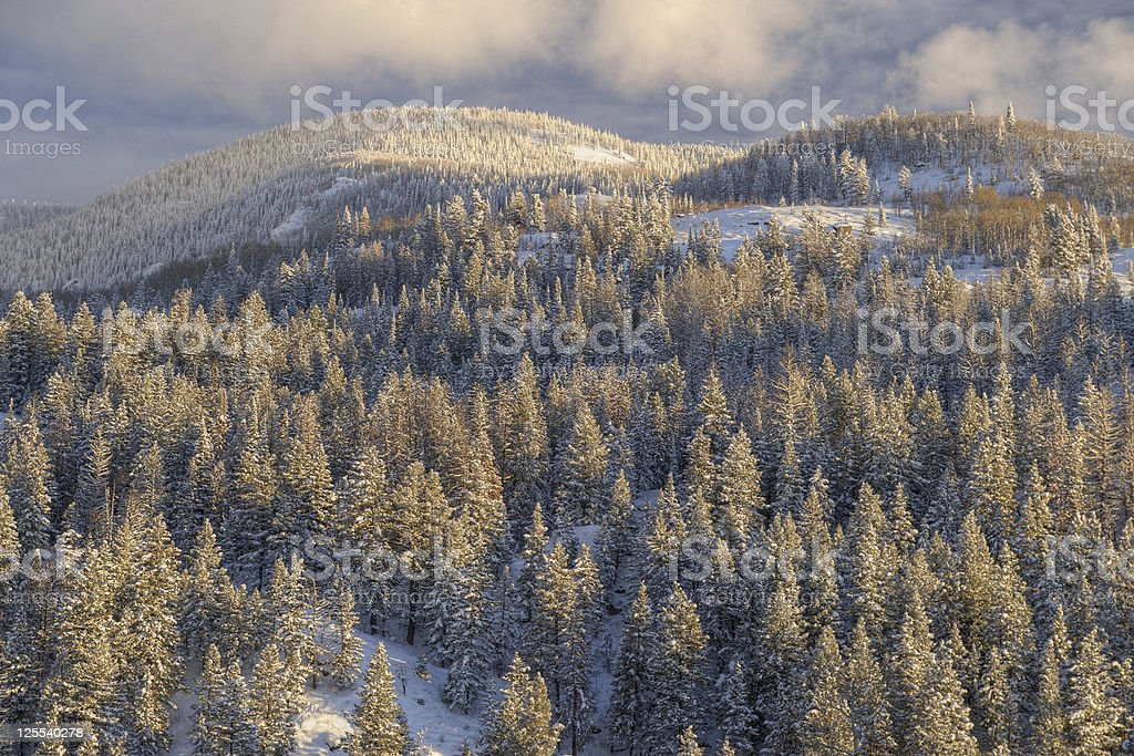 Winter Landscape: Snow Covered Trees on a Mountain stock photo