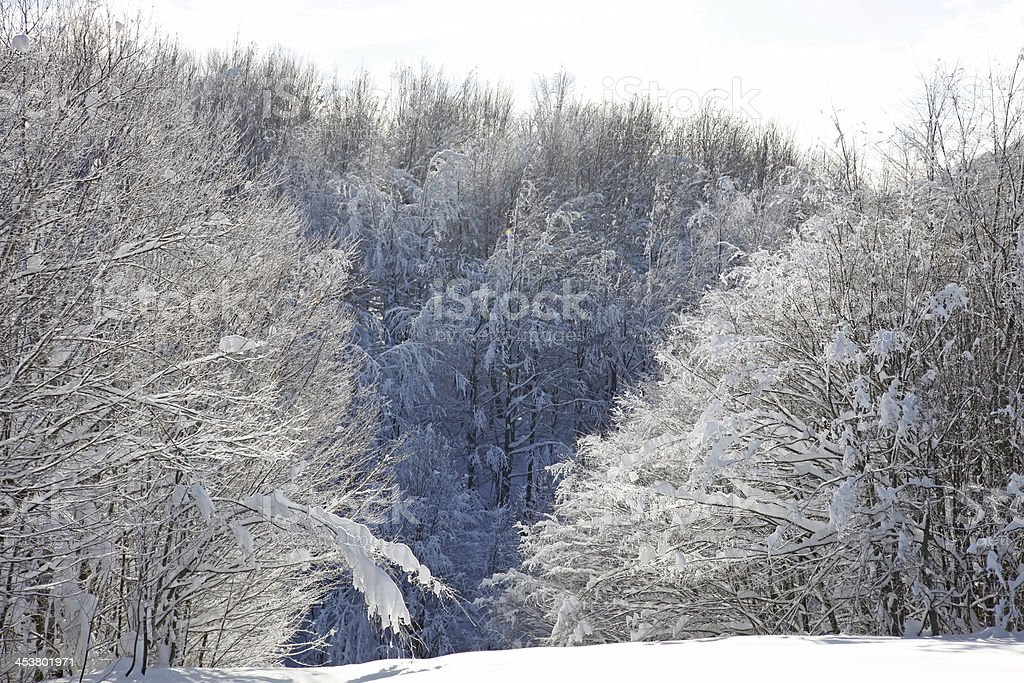 Winter Landscape Texture royalty-free stock photo