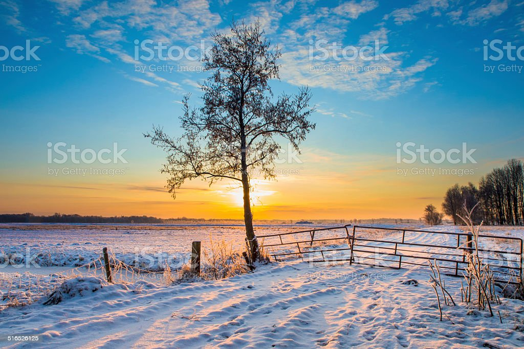 Winter Landscape Tree stock photo