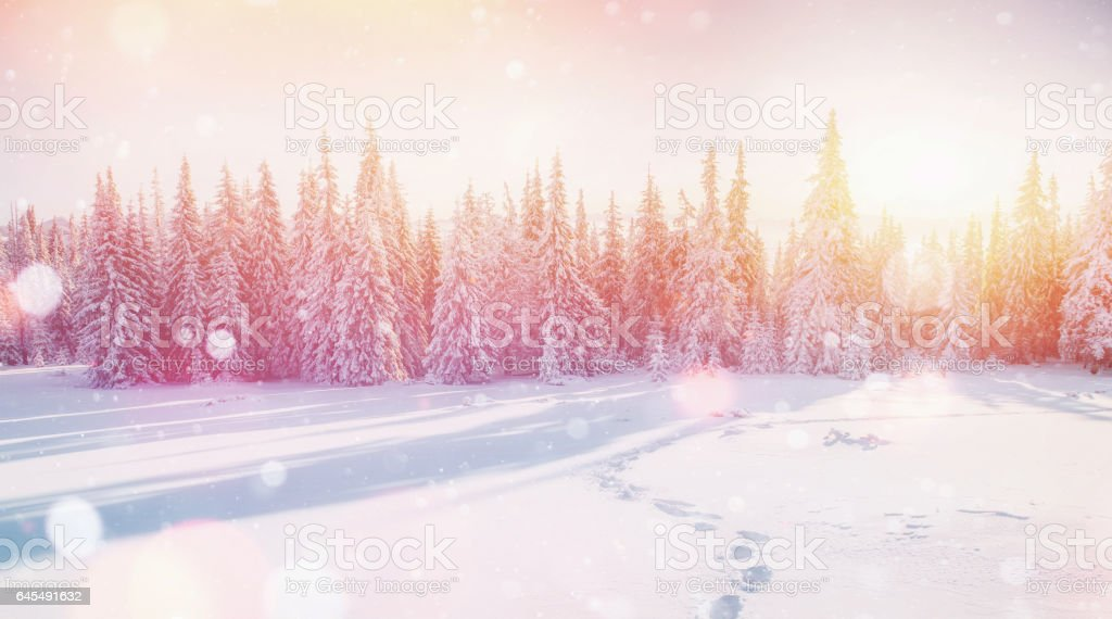 winter landscape trees and fence in hoarfrost, background with s stock photo