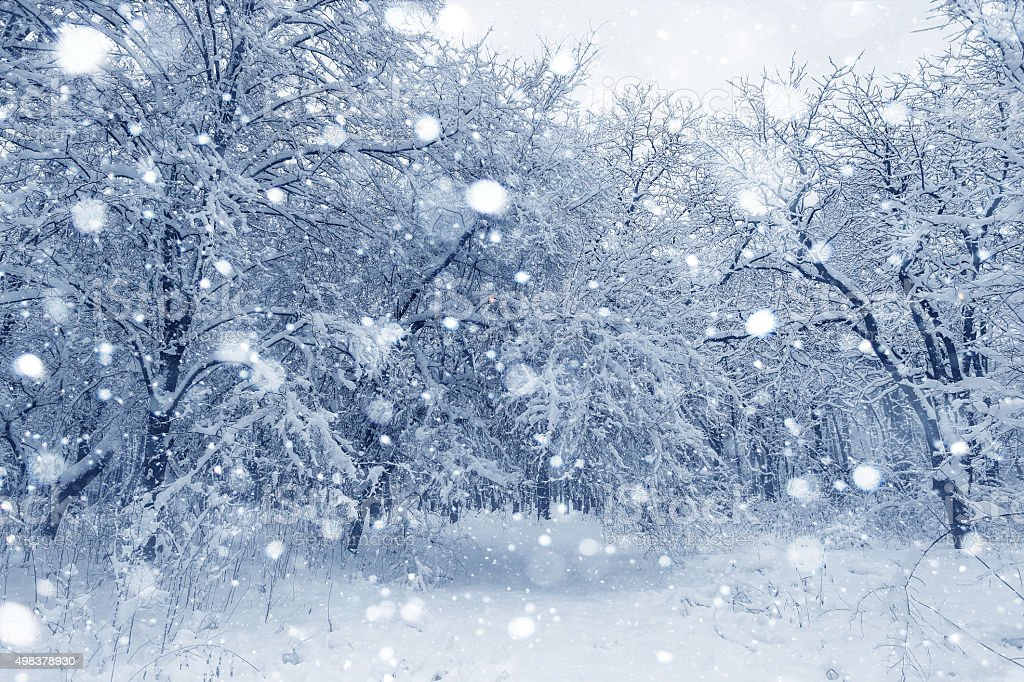 Winter landscape, trees covered in snow stock photo