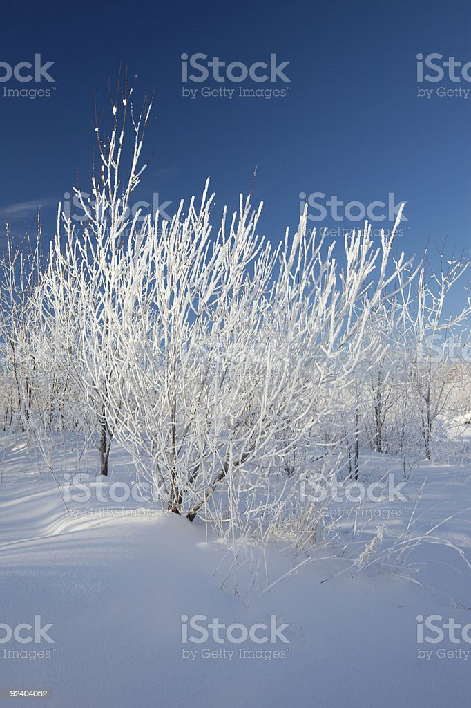 Winter landscape. Trees in a snow royalty-free stock photo