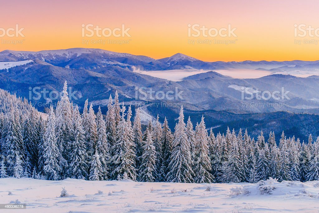 winter landscape trees in frost stock photo