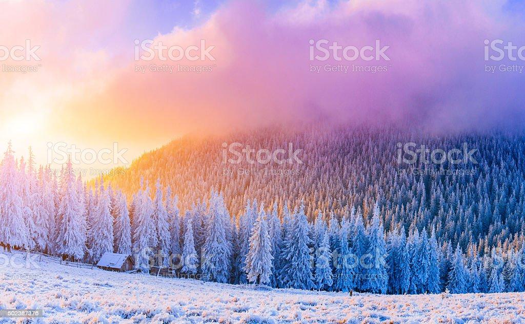 winter landscape trees in frost stock photo