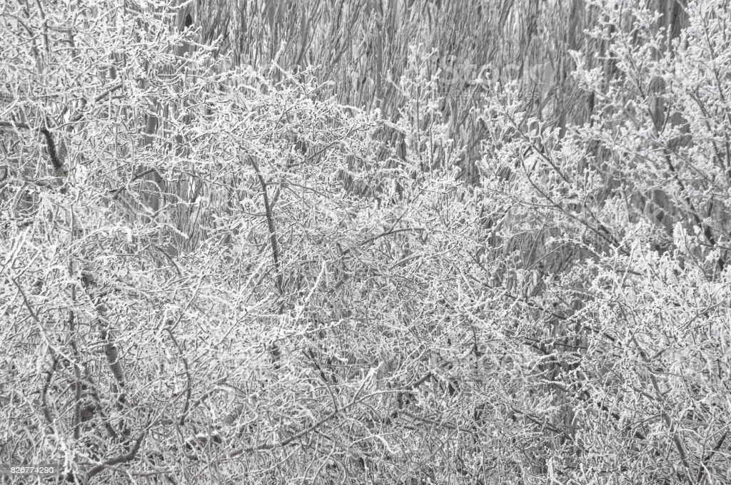 winter landscape - trees in frost stock photo