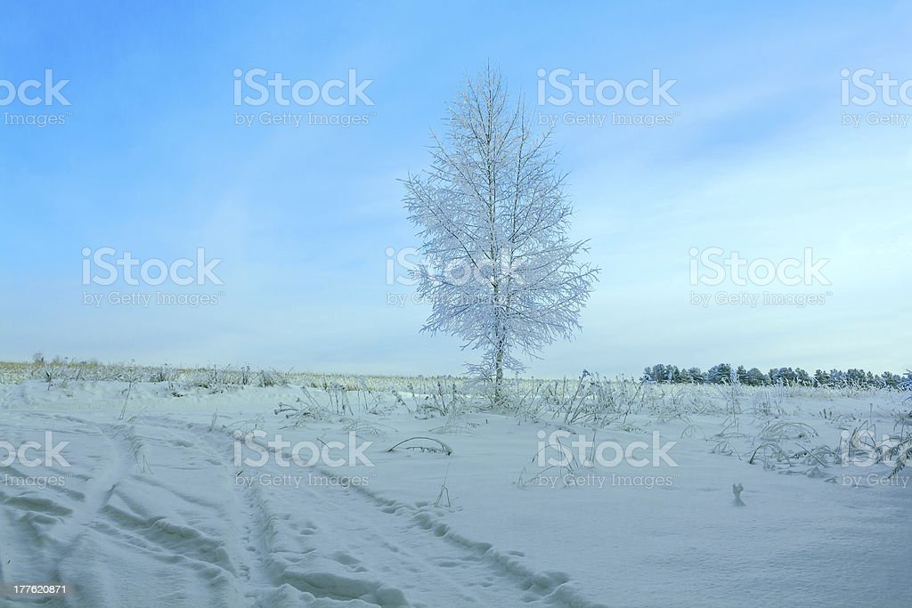 winter landscape with a tree royalty-free stock photo