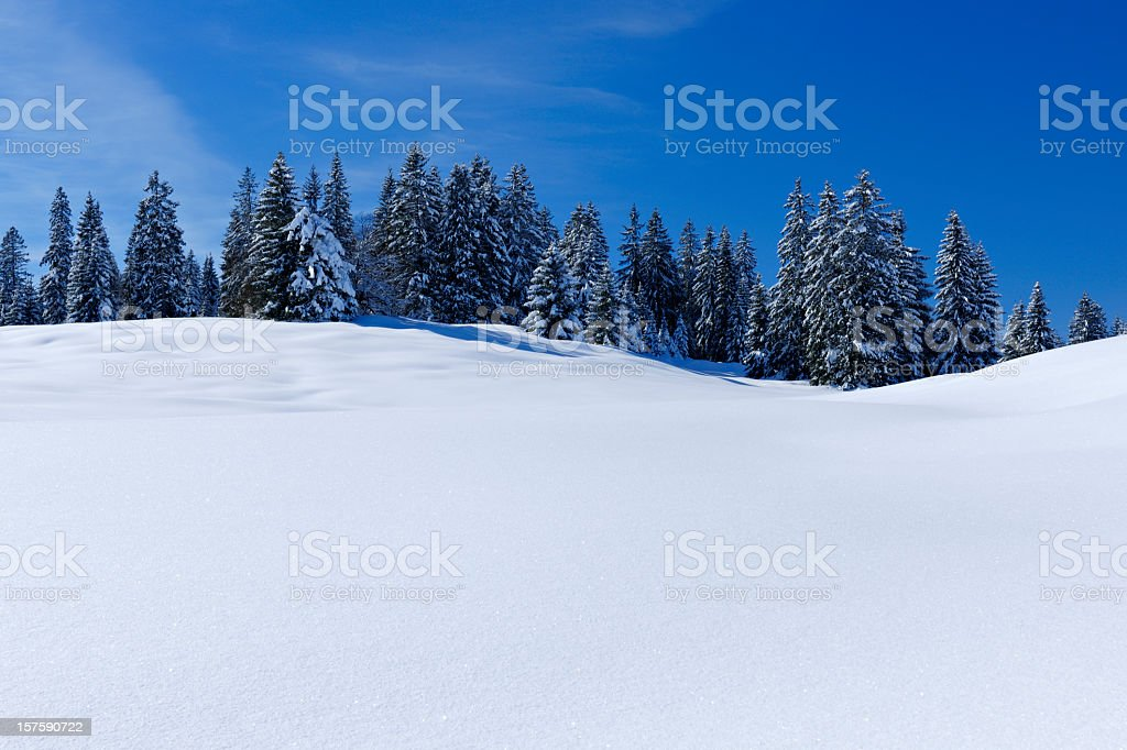 Winter Landscape with Copyspace royalty-free stock photo