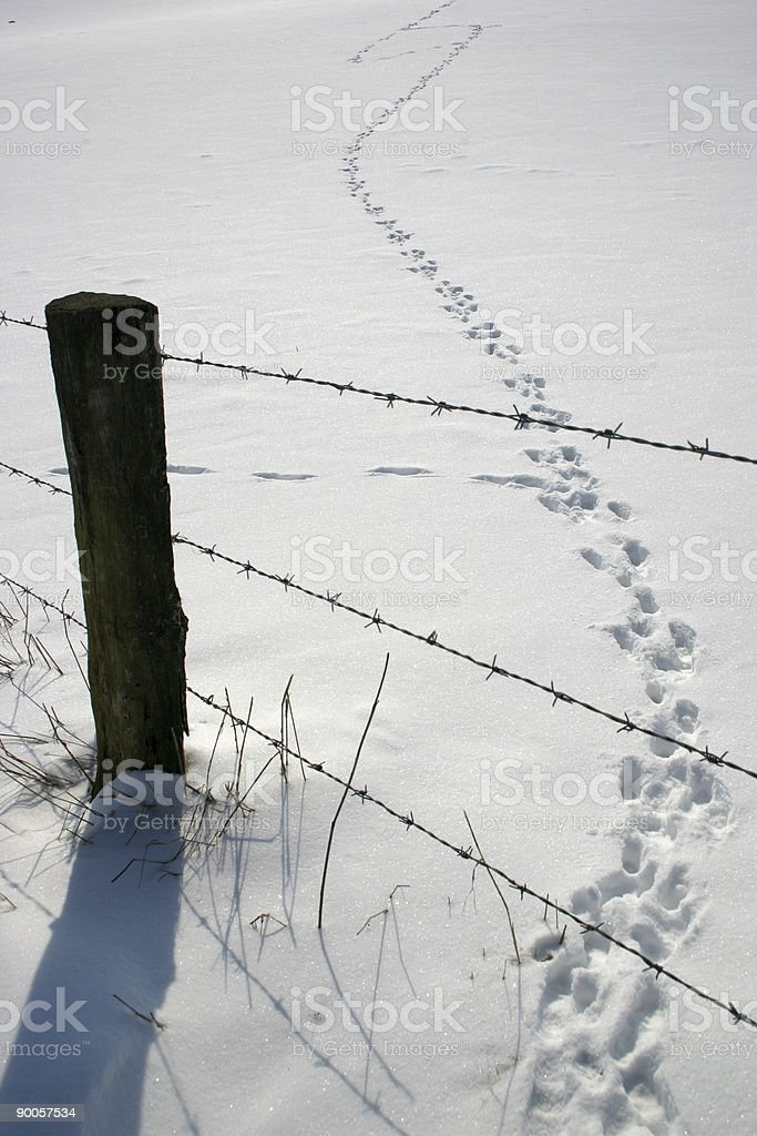 Winter landscape with fence and traces stock photo
