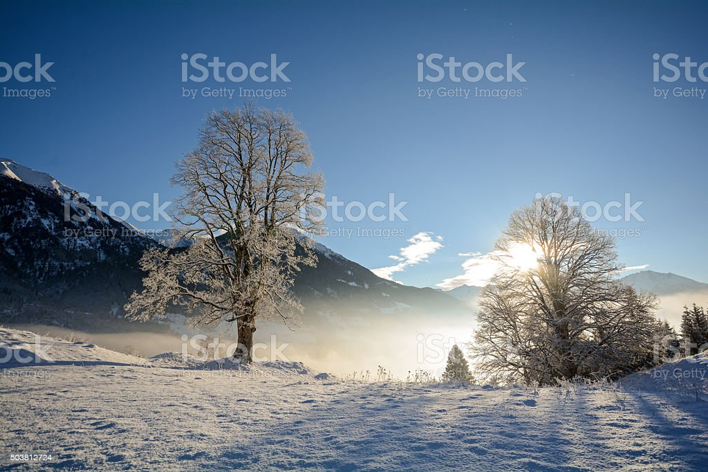 Winter landscape with old trees Hohe Tauern Alps, Salzburg Austria stock photo