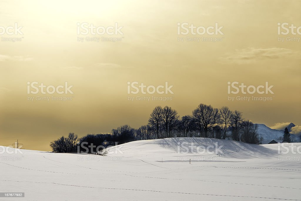 Winter landscape with shrubs and a golden sky royalty-free stock photo