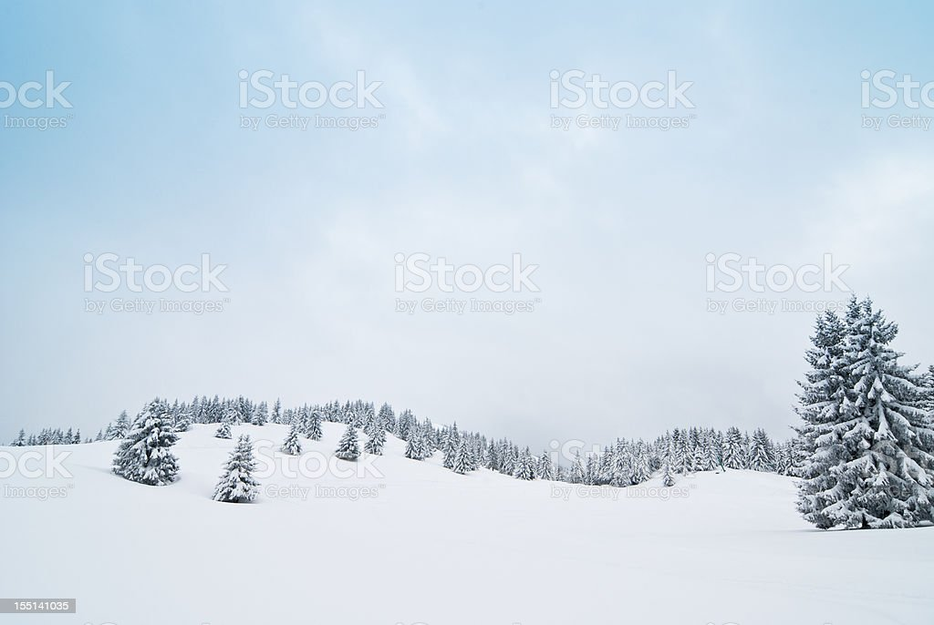 Winter Landscape with Snow and Coniferous Trees stock photo