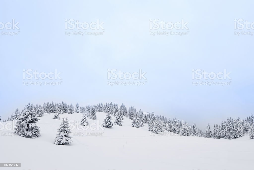 Winter Landscape with Snow and Coniferous Trees royalty-free stock photo