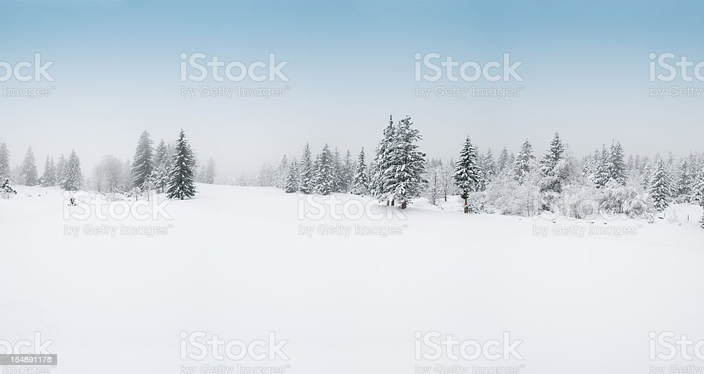 Winter Landscape with Snow and Trees stock photo