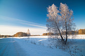 Winter landscape with snow covered birch