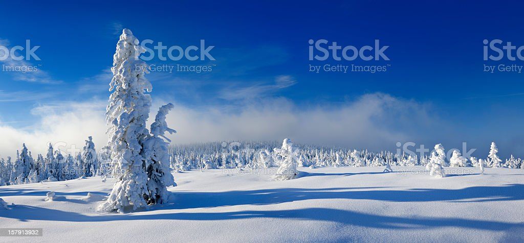 Winter Landscape with Snow Covered Spruce Trees and Approaching Snowfall stock photo