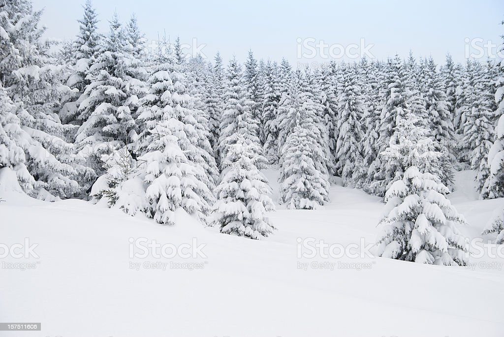 Winter Landscape with Snow Covered Trees royalty-free stock photo