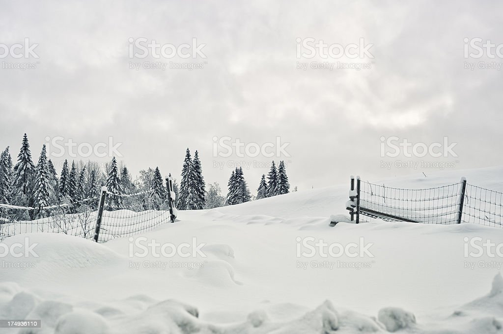 Winter landscape with snow in Sweden.