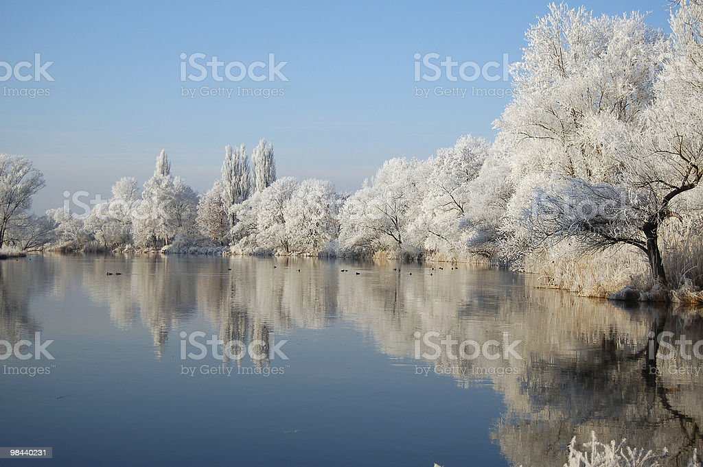 Winter landscape with snowy trees reflecting on water stock photo