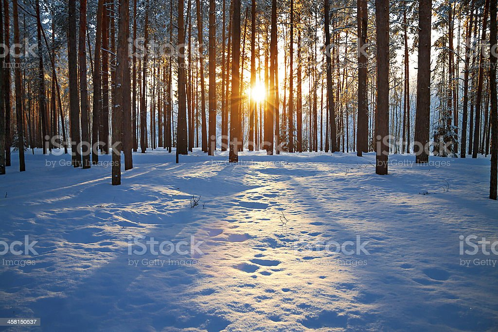 winter landscape with the forest and sunset stock photo