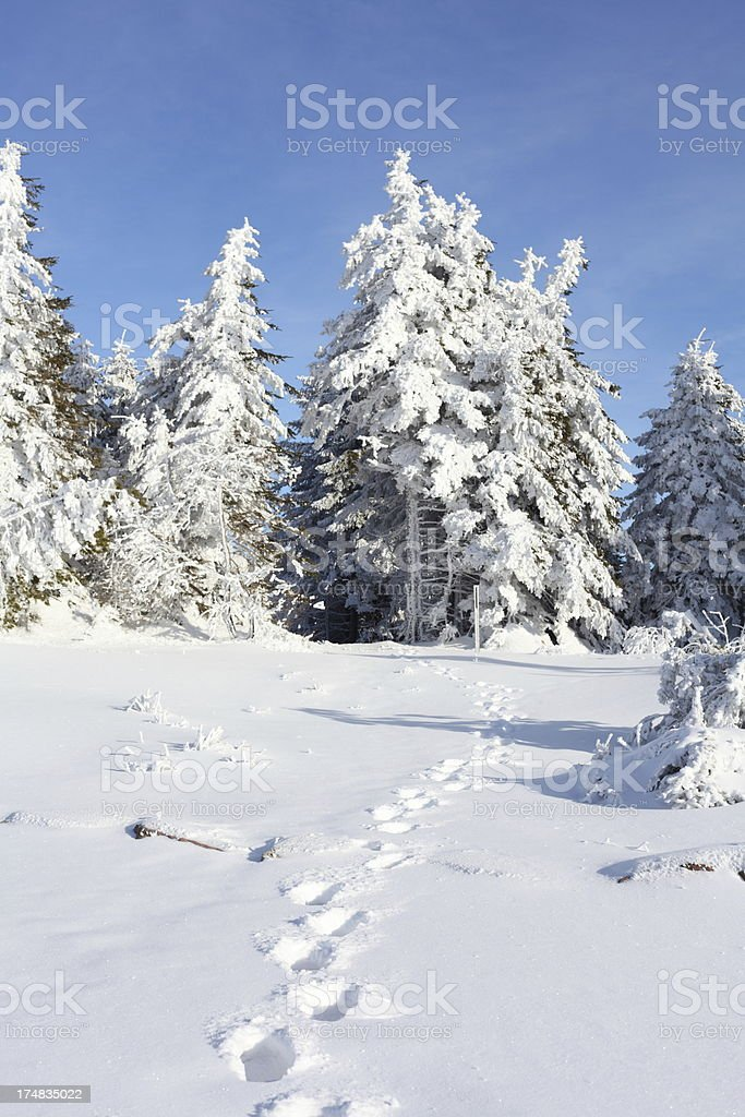 winter landscape with trail royalty-free stock photo