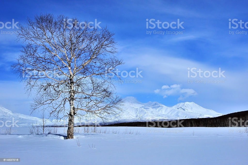Winter landscape with tree and volcano stock photo