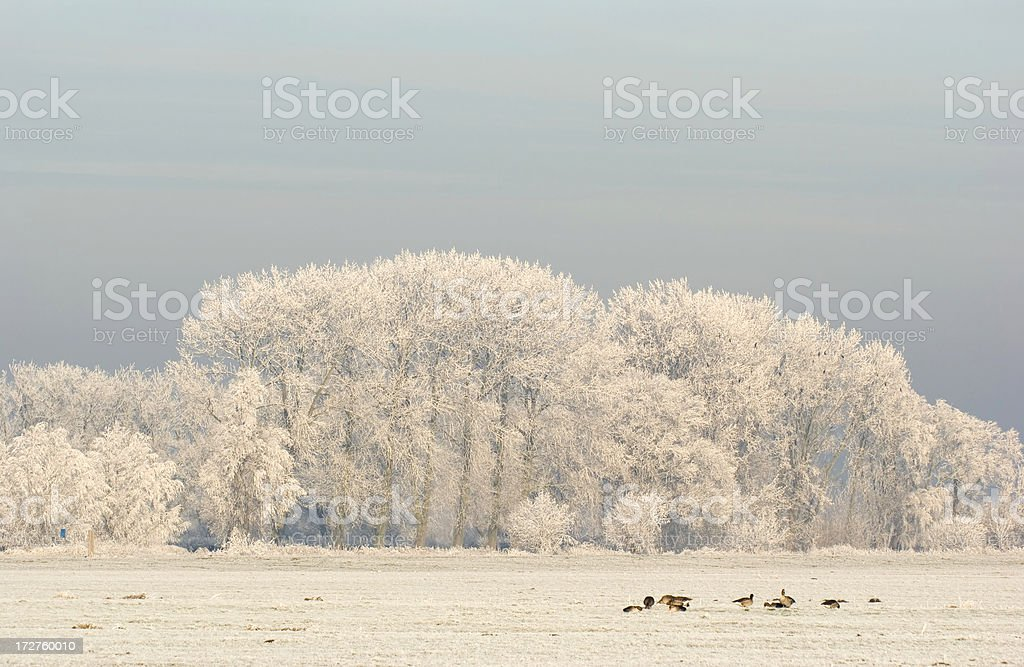 Winter Landscape with Trees (the Netherlands) royalty-free stock photo