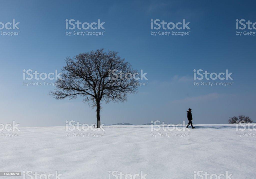winter landscapes stock photo
