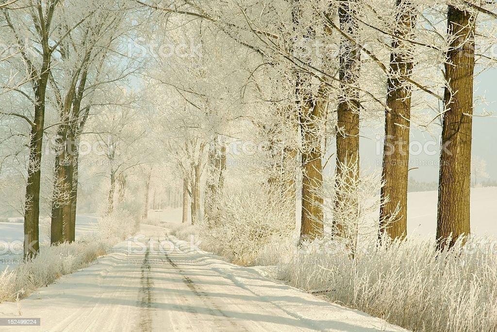 Winter lane at dawn royalty-free stock photo