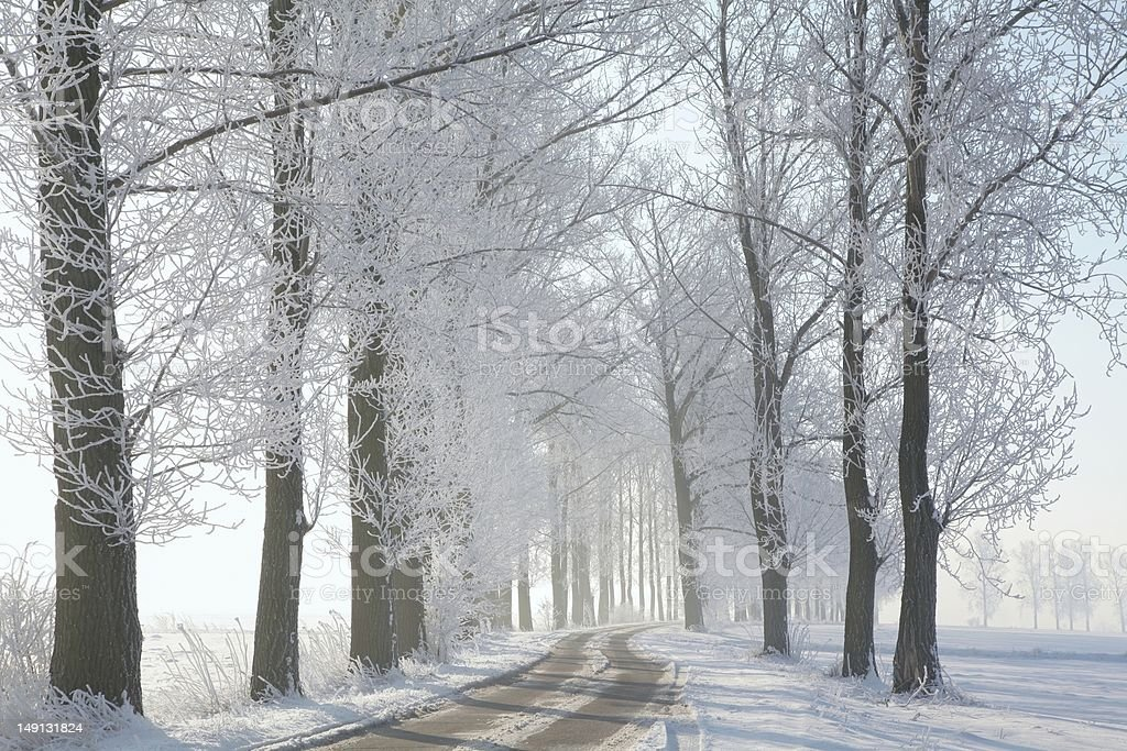 Winter lane on a sunny morning royalty-free stock photo