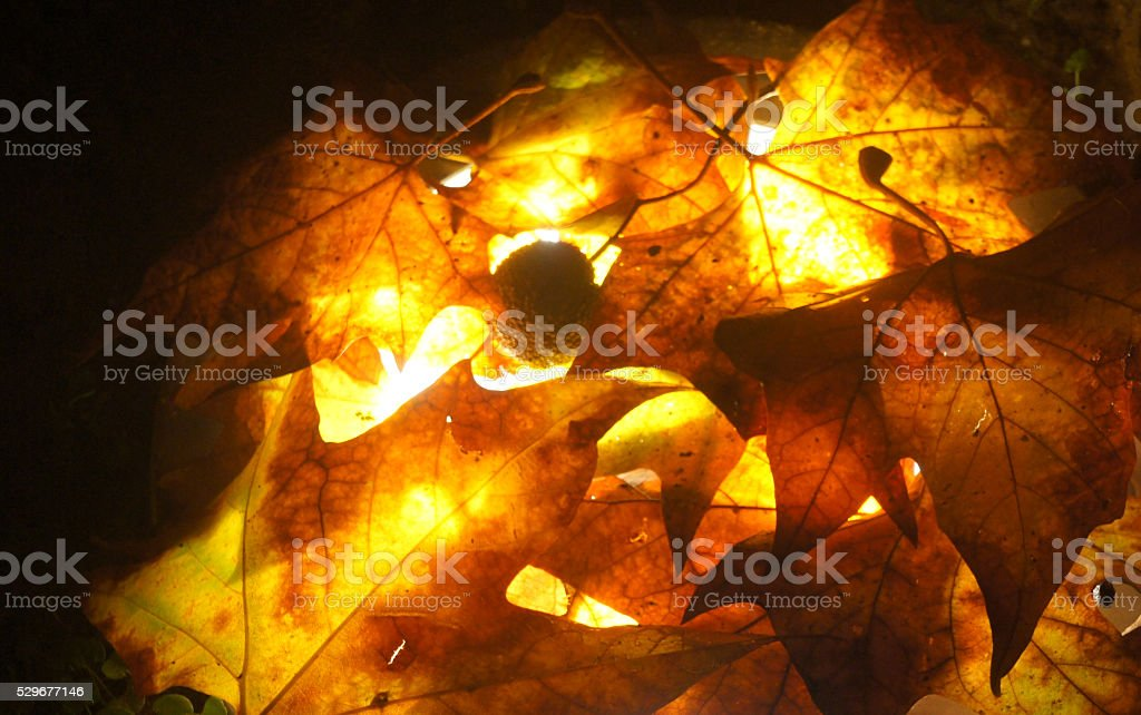 winter leafs stock photo