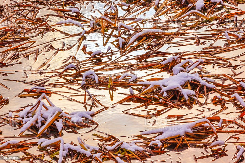 Winter Leaves Snow Ice  Abstract Wenatchee River Valley Washington stock photo