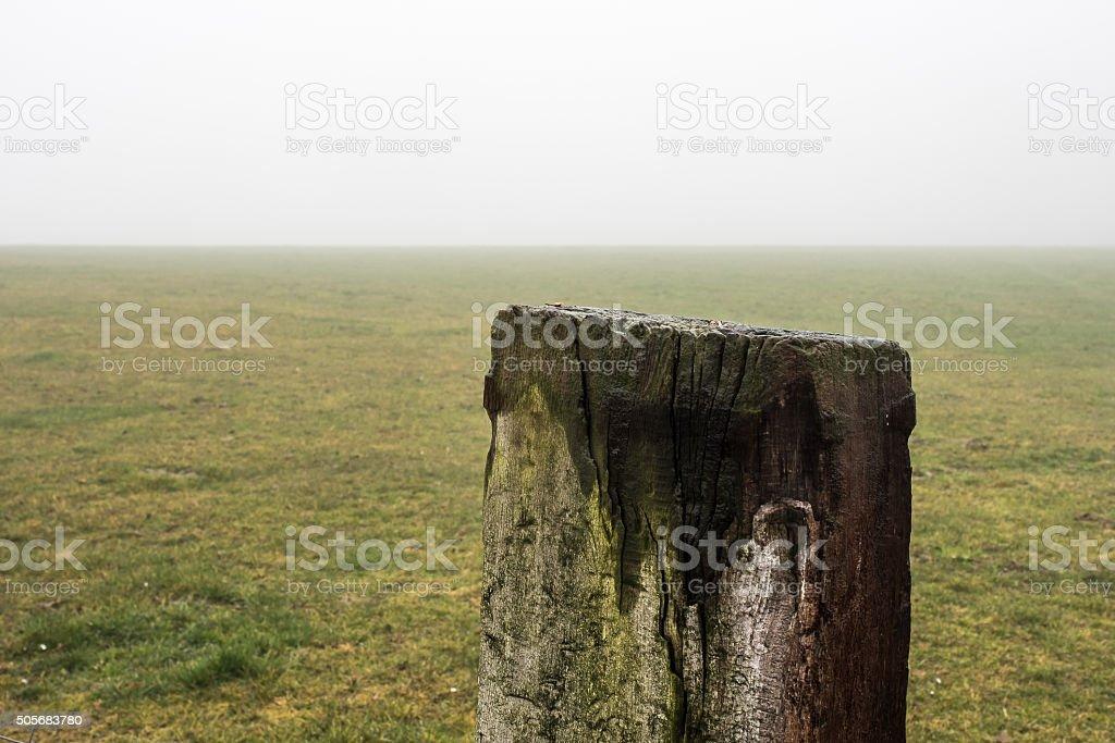 Winter meadow in fog stock photo