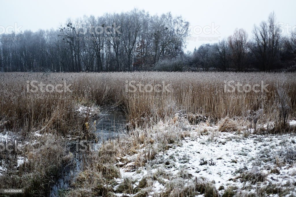 winter meadow royalty-free stock photo