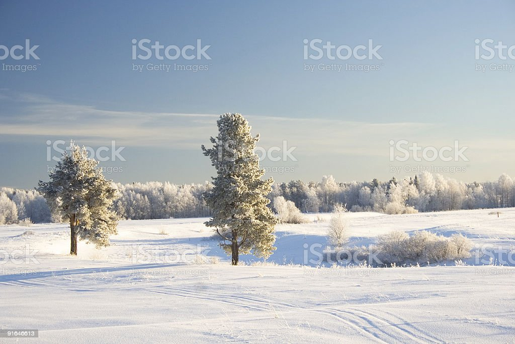 Winter meadow sunny day royalty-free stock photo