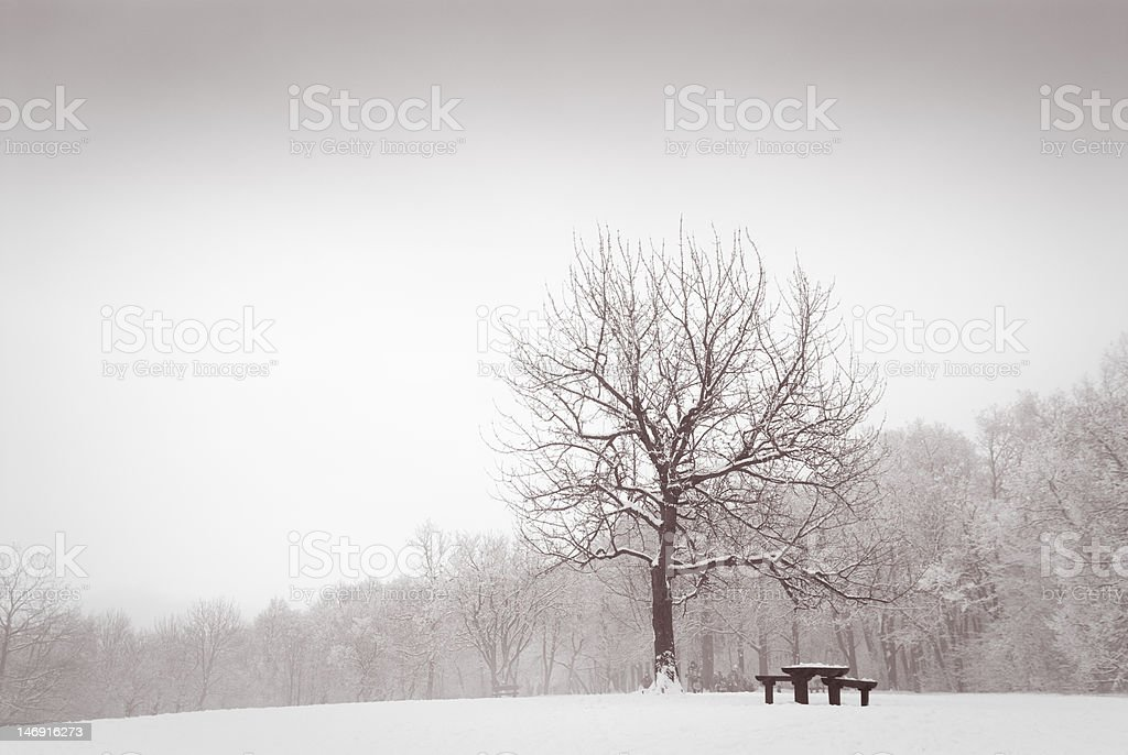 Winter meadow with lonely oak tree royalty-free stock photo